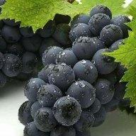 vinogriego