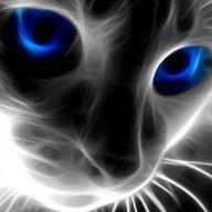 don_gato
