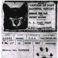 trendyband