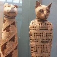 gattobiancoenero